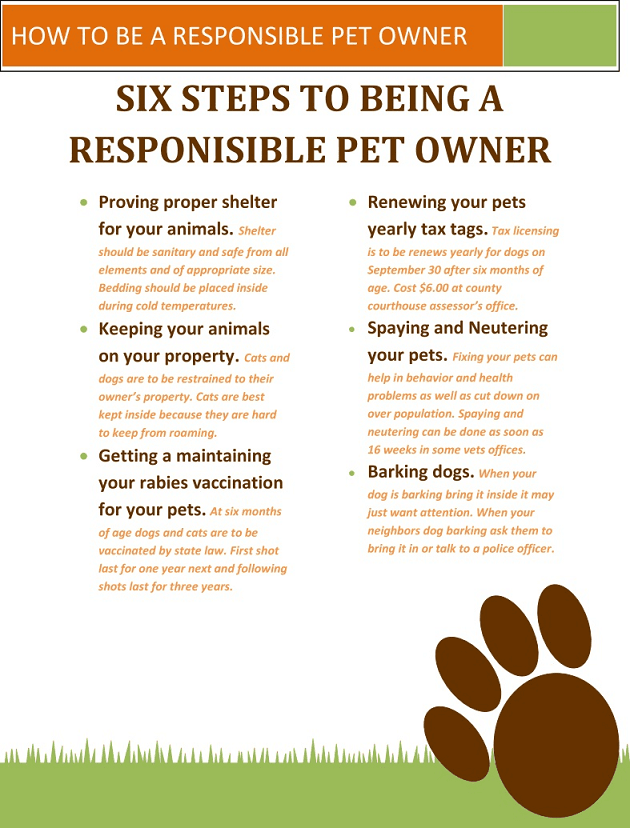 6 Steps to Being a Responsible Pet Owner